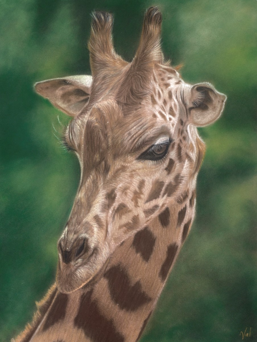 Head Above the Rest  by valerie simms -  sized 12x16 inches. Available from Whitewall Galleries